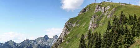alpine pasture in summer