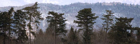 panoramic view of forest hills and trees in winter Stock fotó