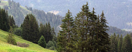 mountain slope with trees