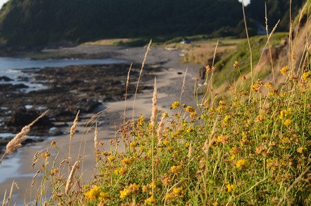 Grass and yellow flowers with a rocky beach in the background. Imagens