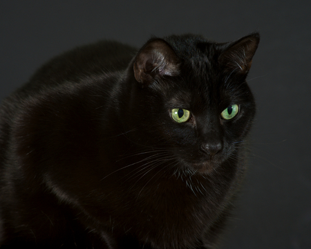 intensely: Black cat sitting, looking intensely at something to the right of camera.
