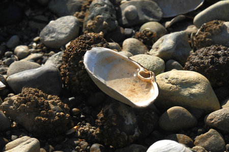 Close up of a open empty shell with water in it, resting on rocks Stock Photo