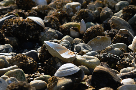 Open empty shell with water in it, resting on rocks Stock Photo