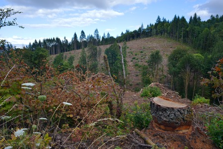 A hillside that has been mostly clearcut, with a tree stump in the foreground. Stock Photo