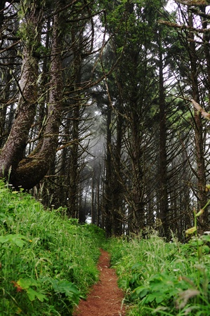 Thin dirt trail through a lush forest, with fog encroaching. Stock Photo