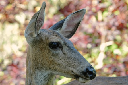 Close up on the head of a deer looking to the side.