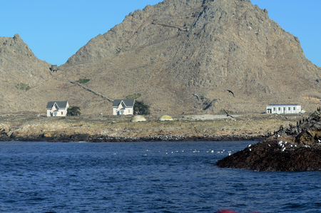 Houses and building on the Southeast Farallon Island, where scientific researchers live while on the island. Edge of small island with shore and seabirds.