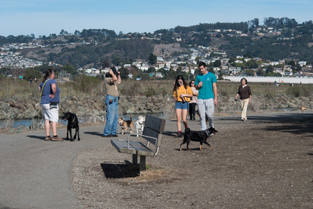 RICHMOND, CALIFORNIA, NOVEMBER 11 2017, People walking their dogs at Point Isabel Dog Park, a off leash public dog park with views of the San Francisco Bay Editorial
