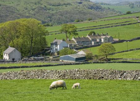 derbyshire: farmhouse valley sheep derbyshire peak district england uk Stock Photo