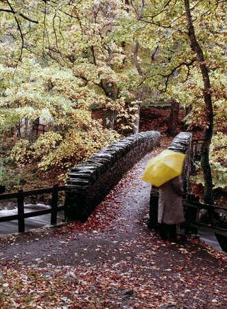 cumbria: river autumn trees english lake district cumbria uk