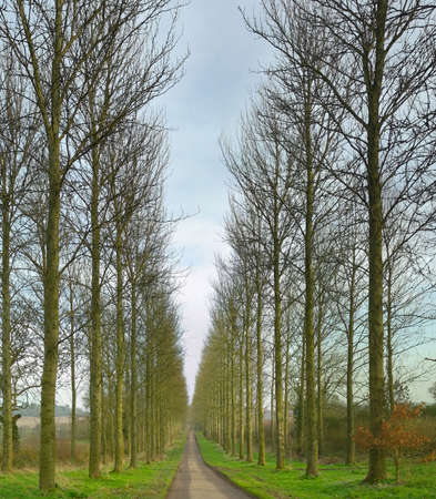 warwickshire: avenue of poplar trees umberslade hall warwickshire midlands england uk Stock Photo