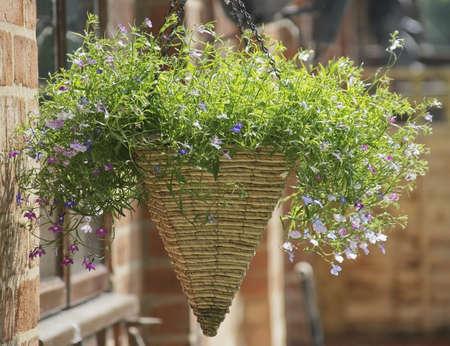 hanging basket: hanging basket in garden
