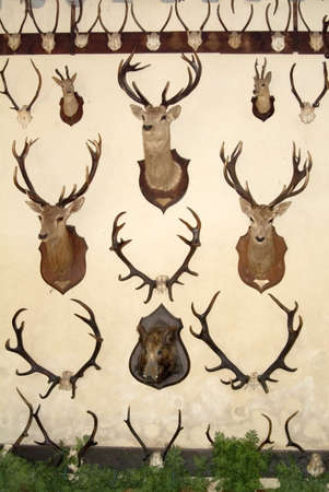 animals heads killed by hunters chateau cheverny loire valley\ france