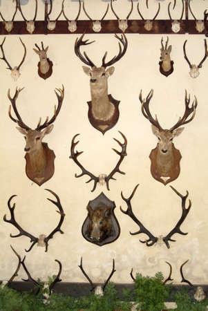 vermoord: hoofden dieren gedood door jagers kasteel Cheverny Loire Frankrijk
