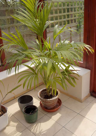 conservatories: conservatory  plants room in house next to garden