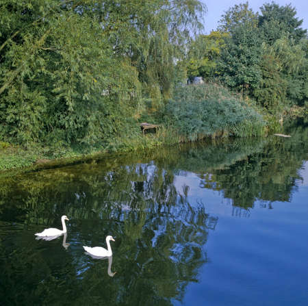 ouse: england home counties sharnbrook,bedfordshire the river great ouse