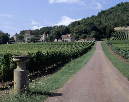 viniculture: vineyard parnac lot valley midi pyrenees near cahors france europe