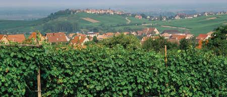 des vins: france alsace lorraine route des vins vineyards zellenburg haut rhin