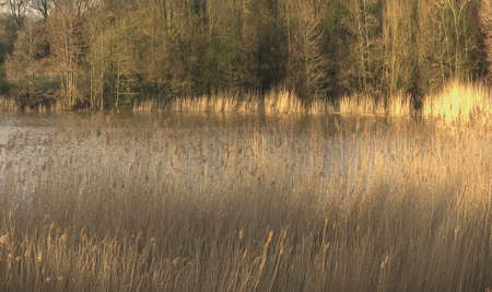 redditch: arrow valley lake country park redditch worcestershire midlands england uk