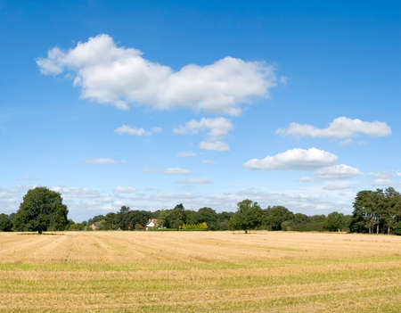 arable: farmland empty cornfield after harvesting of arable crops