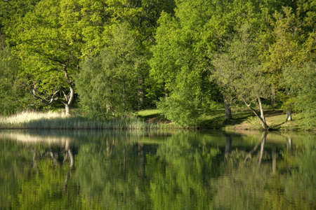 dean lake: england gloucestershire the forest of dean