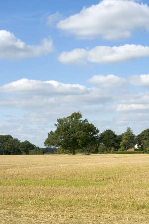 harvests: farmland empty cornfield after harvesting of arable crops