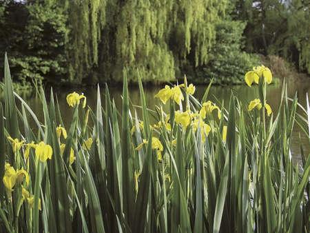 enfield: london enfield trent parco paese l'acqua parco giardino
