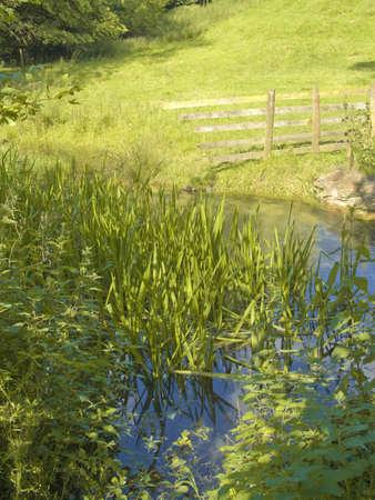 slaughter: the river eye flowing between lower slaughter and upper slaughter villages the cotswolds midlands england uk