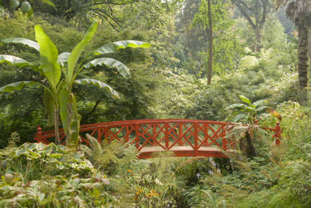 subtropical: england dorset abbotsbury subtropical gardens