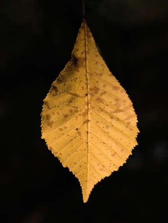 close up of autumn leaf  photo