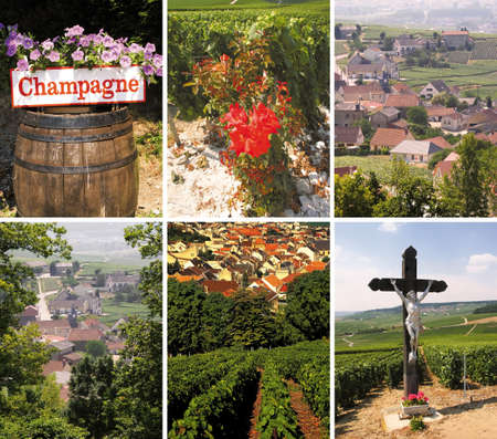 viticultura: 6 images of champagne vineyards epernay champagne ardennes france