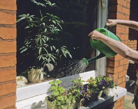 regando plantas: regar las plantas pueden regar las cestas en el umbral ventana