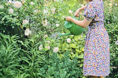 regando plantas: regar las plantas en cestos regadera ventana