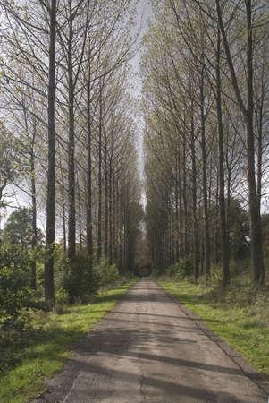 warwickshire: country road umberslade warwickshire fields farm farmland Stock Photo