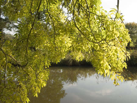 overhanging: The stratford upon avon canal preston at bagot flight of locks warwickshire midlands england uk.