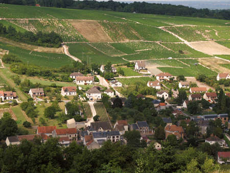 Vineyards in the loire valley france. Stock Photo - 2369413