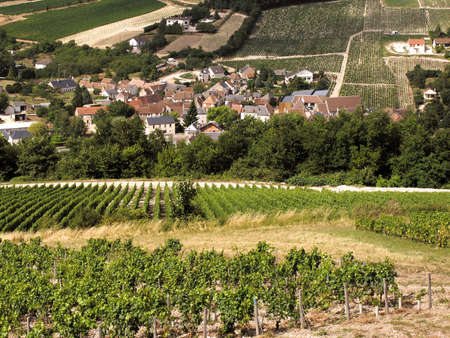 viticulture: Vineyards in the loire valley france.