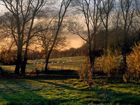 welford on avon: Farmland with sheep in field.