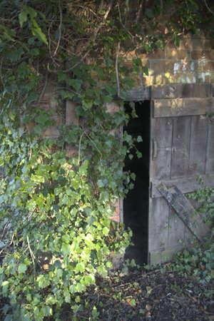 Old open door in wall with ivy. photo