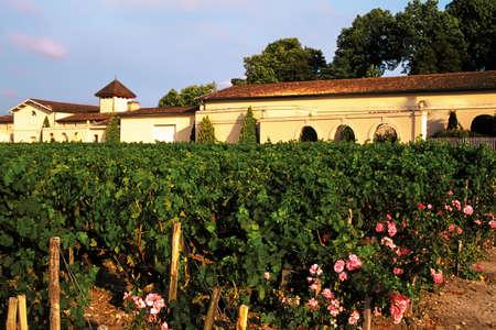 Haut medoc vineyards bordeaux france. photo