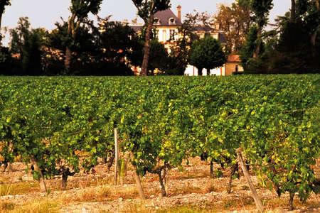 Haut medoc vineyards bordeaux france.