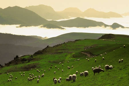 shepherd sheep: The col de la pierre st martin in the pyrenees-atlantique aquitaine france. Stock Photo
