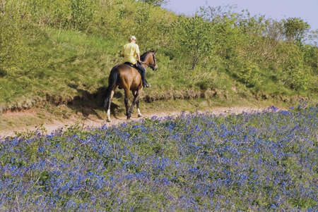 eventing: A woman riding a horse. Stock Photo