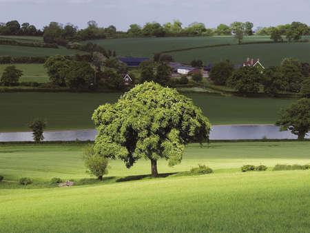 counties: Hertfordshire Village farmland Tree lake lily Bottom Winkwell Nr. Luton Home Counties England