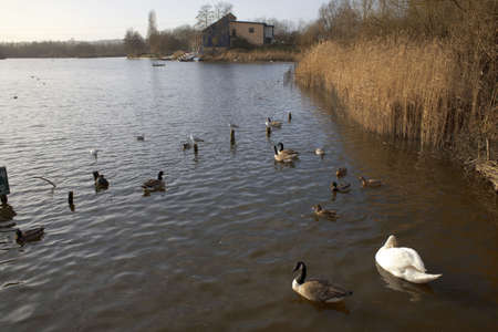 country park: La flecha valle del lago del parque pa�s Redditch Worcestershire Midlands Inglaterra Reino Unido.