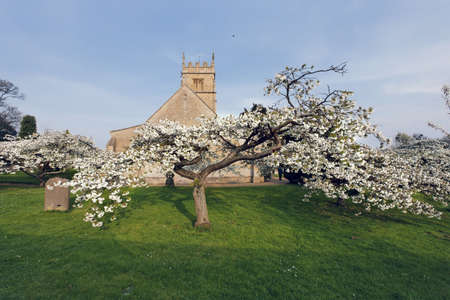 worcestershire: Trees in blossom at overbury church worcestershire.