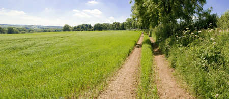 grass verge: a field of crops with a track