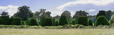 packwood: england midlands warwickshire grounds of packwood house hedges topiary Stock Photo