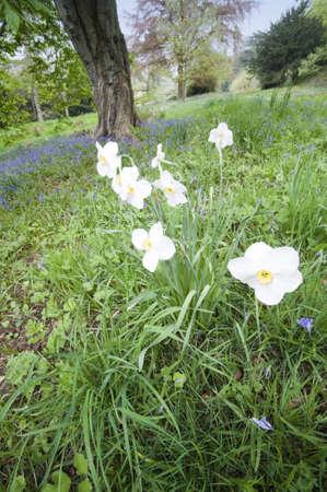 chatsworth: england derbyshire chatsworth  - the formal gardens Stock Photo