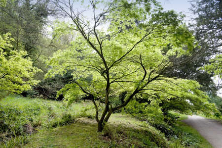 chatsworth: england derbyshire chatsworth house - the formal gardens